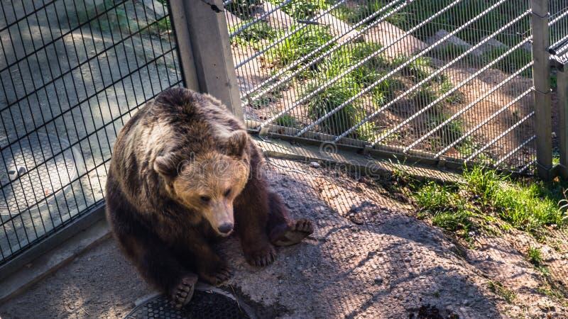 熊公园 免版税库存照片
