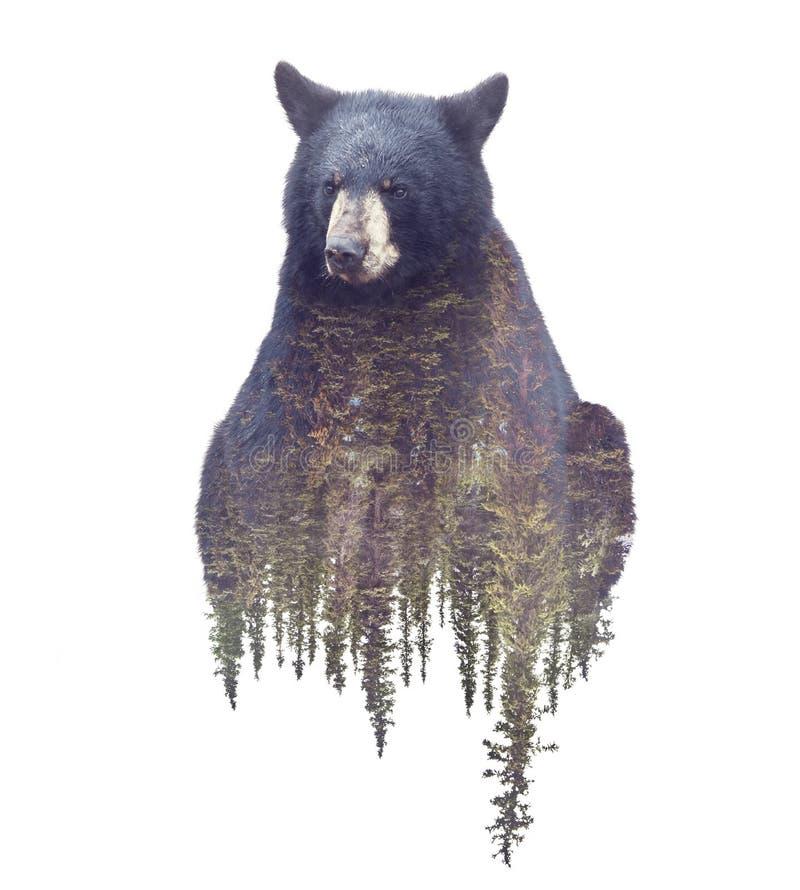 熊和森林水彩两次曝光作用 库存图片