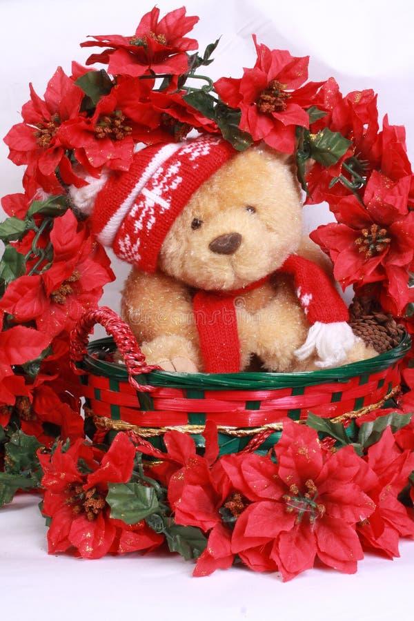 熊圣诞节poinsetta 免版税库存图片