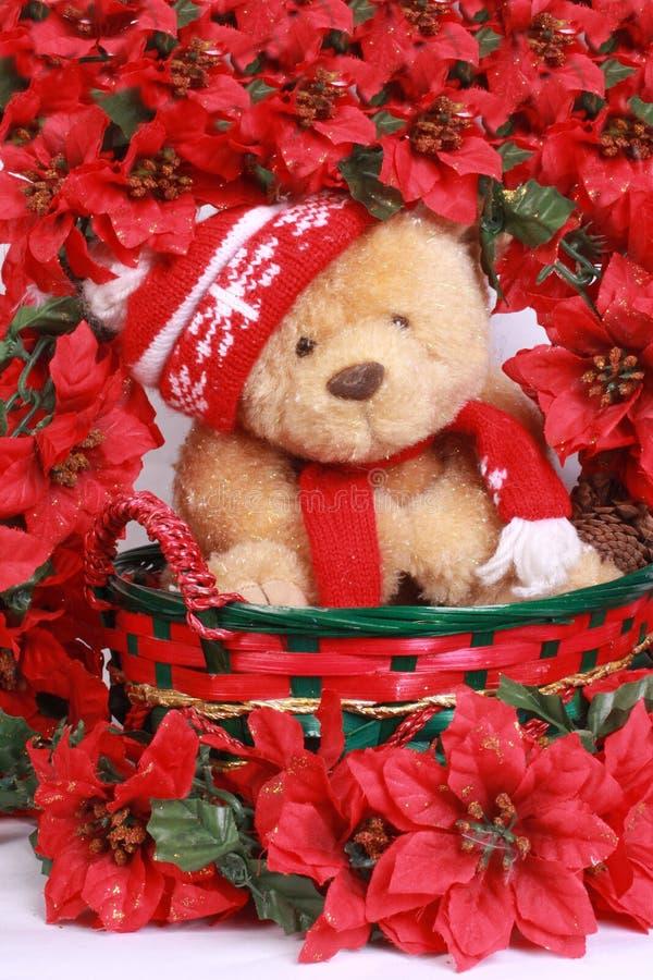 熊圣诞节poinsetta 免版税库存照片