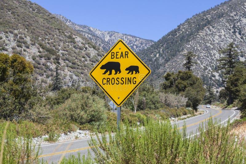 熊在高速公路的横穿标志在农村山路 库存照片
