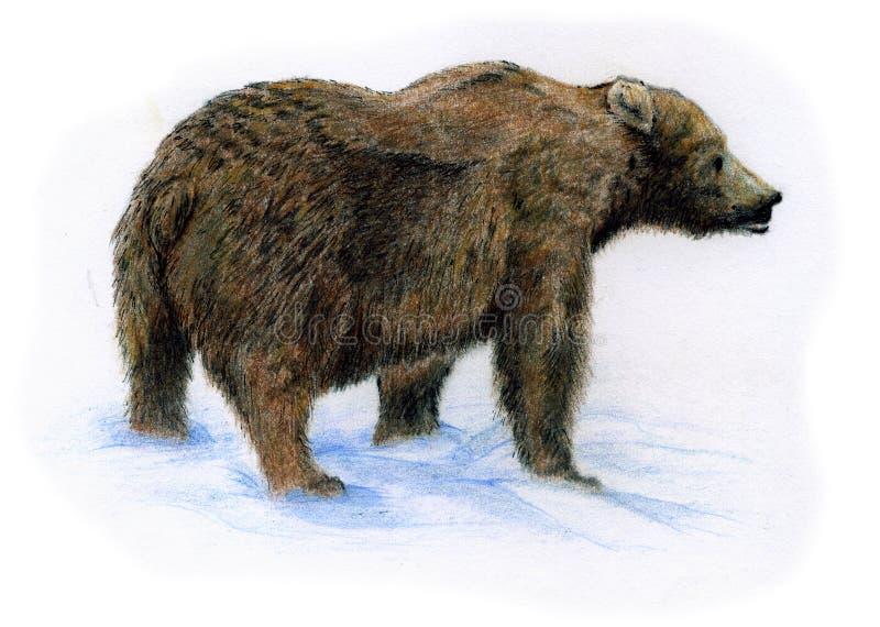 熊棕色雪 皇族释放例证