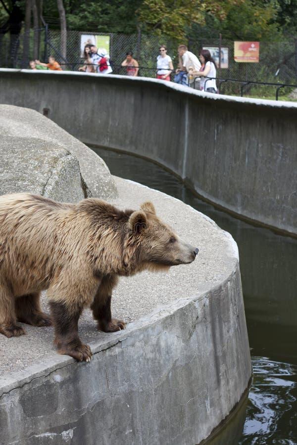 熊游人华沙动物园 库存图片