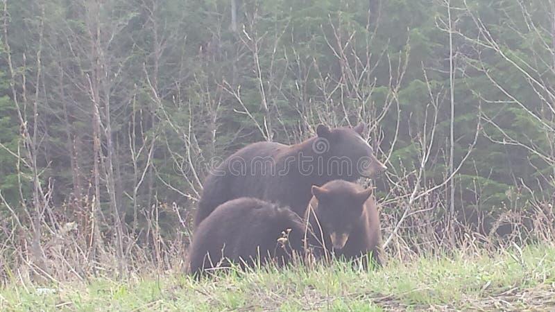 熊系列 库存图片