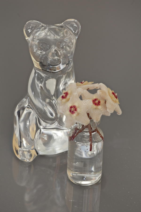 熊水晶小雕象霍亚花 库存照片