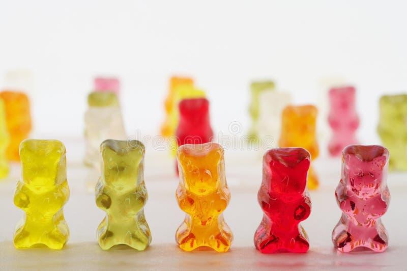 熊 免版税库存照片