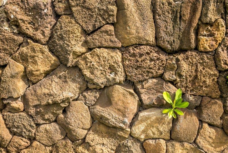 熔岩墙壁 免版税图库摄影