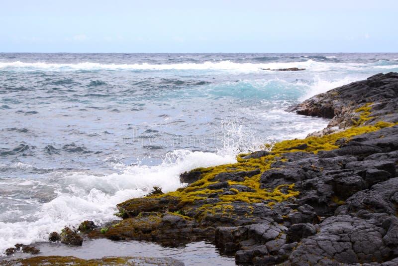 熔岩海岸青苔 库存照片