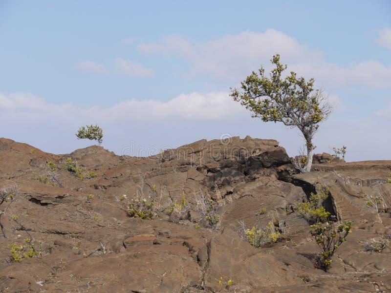 熔岩风景在夏威夷 免版税库存照片