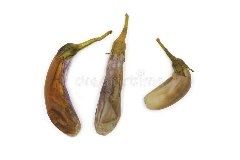 熟蛋植物:与泰国辣味番茄酱垂度的亚洲茄子垂度,隔绝在白色背景 免版税库存图片