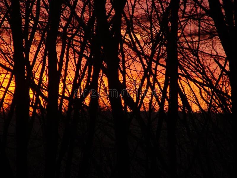 燃烧的日落和黑森林 免版税图库摄影