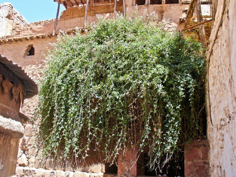 燃烧的矮树丛埃及悬钩子属植物sanctus西&# 免版税库存图片