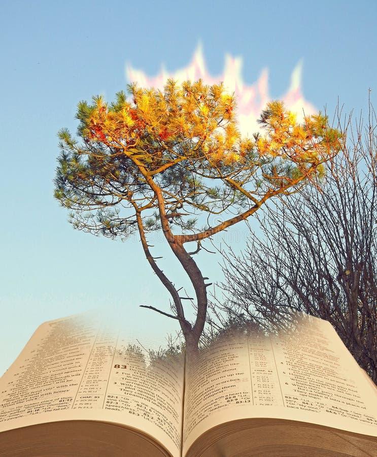 燃烧的矮树丛树神存在的摩西 免版税库存照片