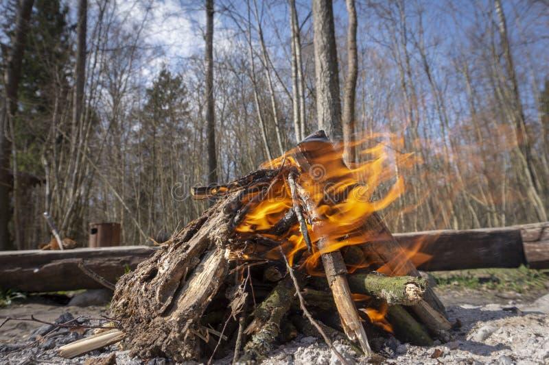 燃烧的阵营火在森林或森林地里 免版税库存图片