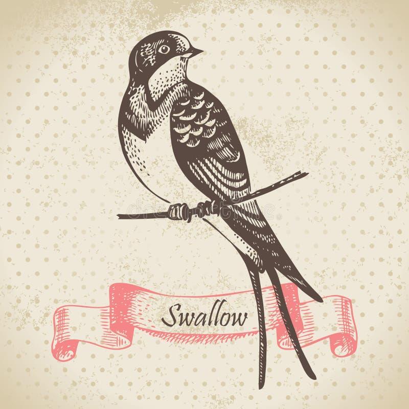 燕子鸟,手拉的例证 向量例证