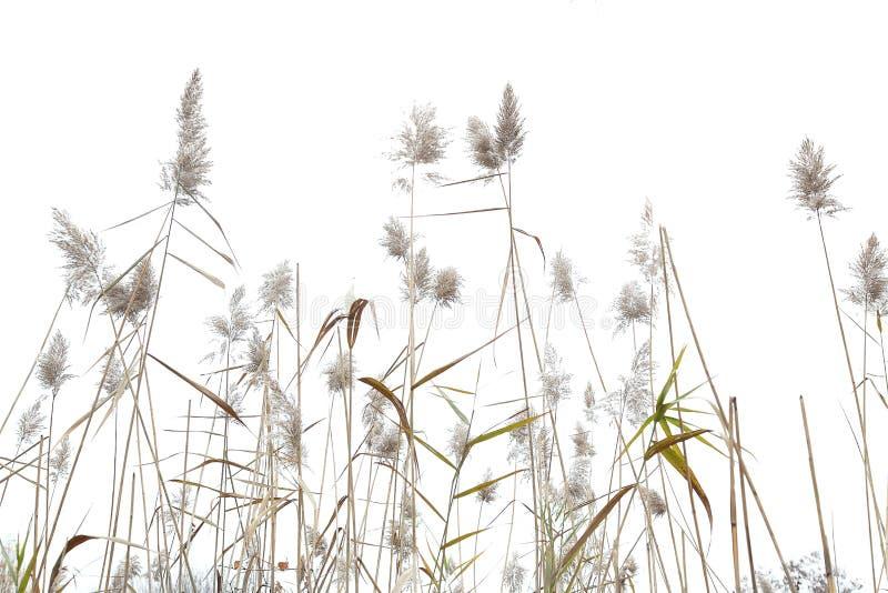 燕麦海运 图库摄影