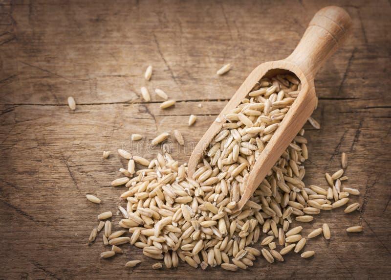 燕麦种子 免版税库存照片