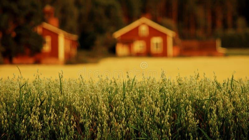燕麦领域和红色房子 免版税库存照片