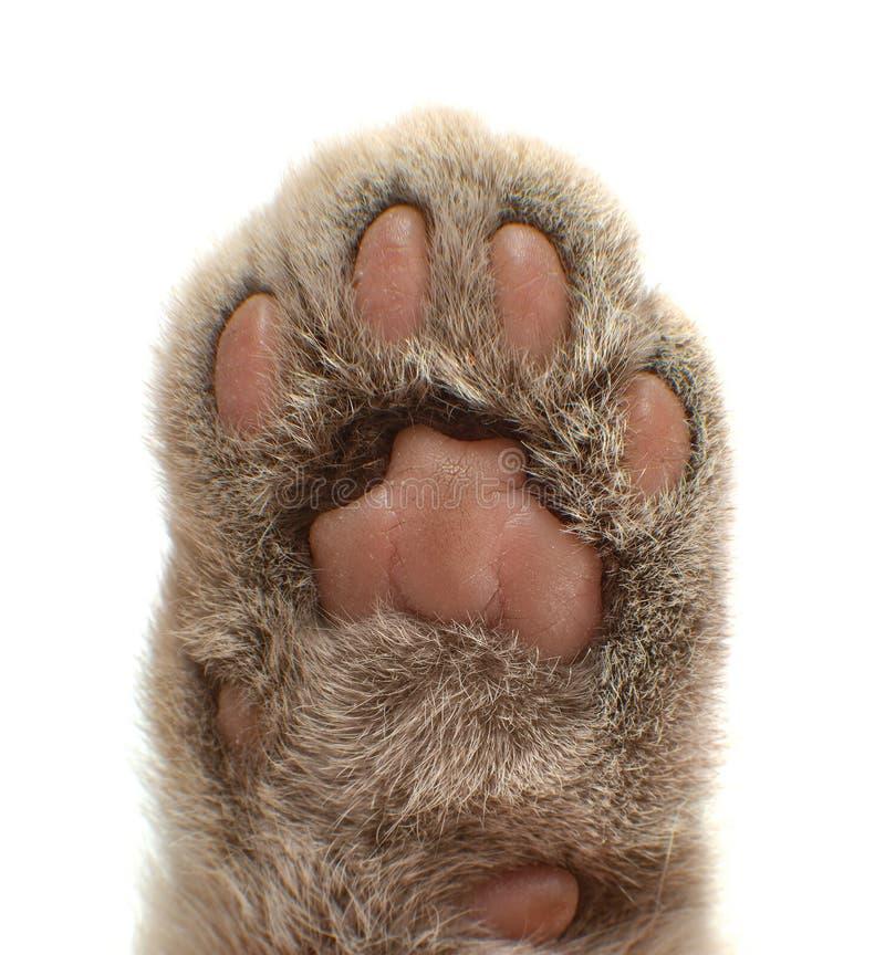 爪с猫 库存图片