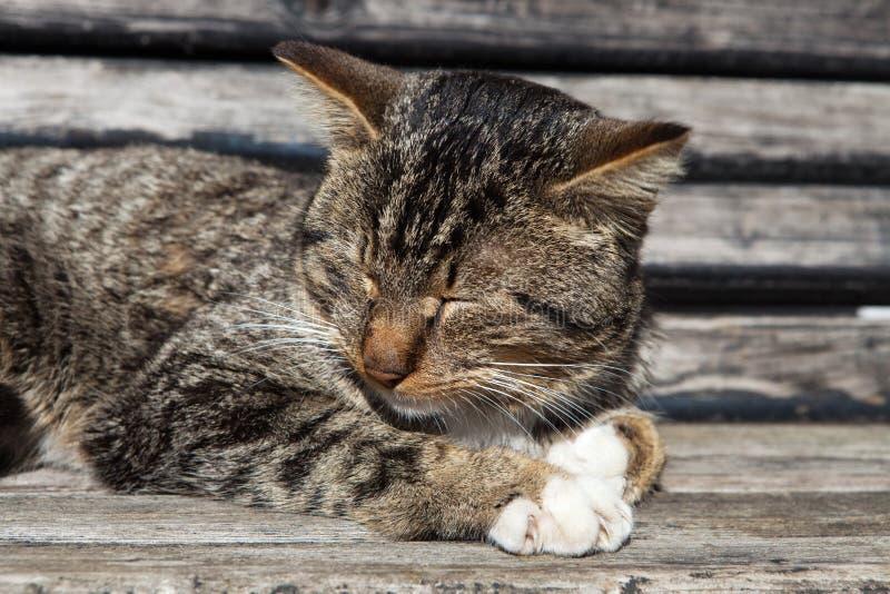 Download 爪和颊须 库存照片. 图片 包括有 纵向, 唯一, 宠物, 相当, 逗人喜爱, 晴朗, 毛皮, 敌意, 颊须 - 30334320