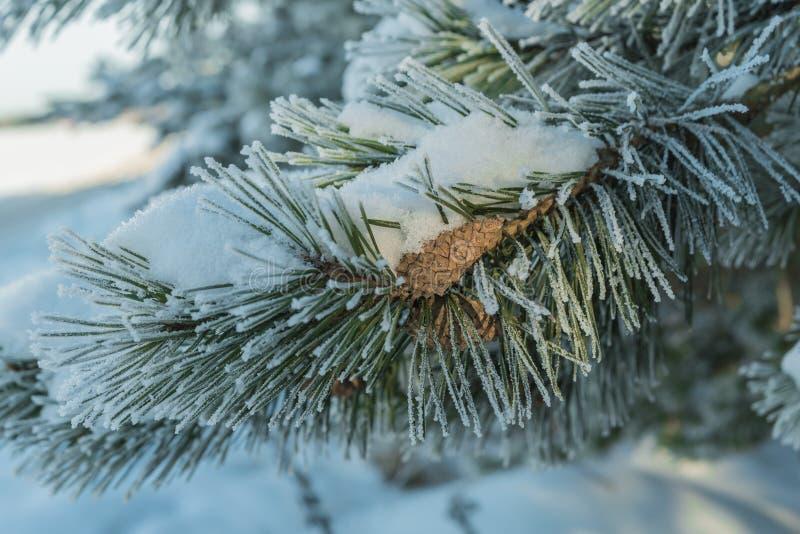 爪子吃了霜和雪与爆沸 免版税库存图片