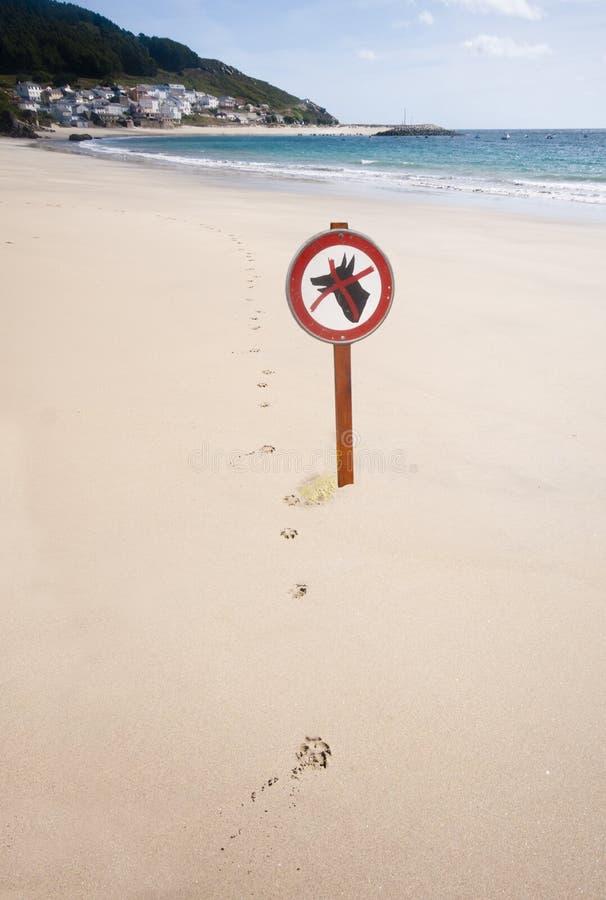 爪子打印和狗在海滩不签字 库存图片