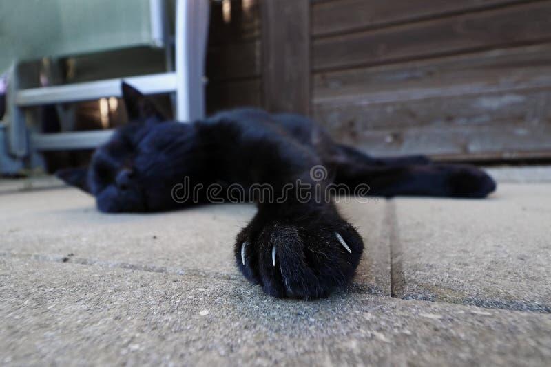 爪子的广角射击有恶意嘘声的爪的 免版税库存照片
