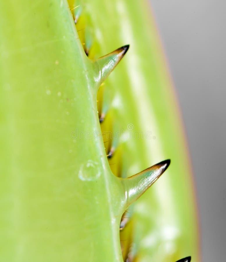 爪子螳螂 2009朵超级花宏观的夏天 库存照片