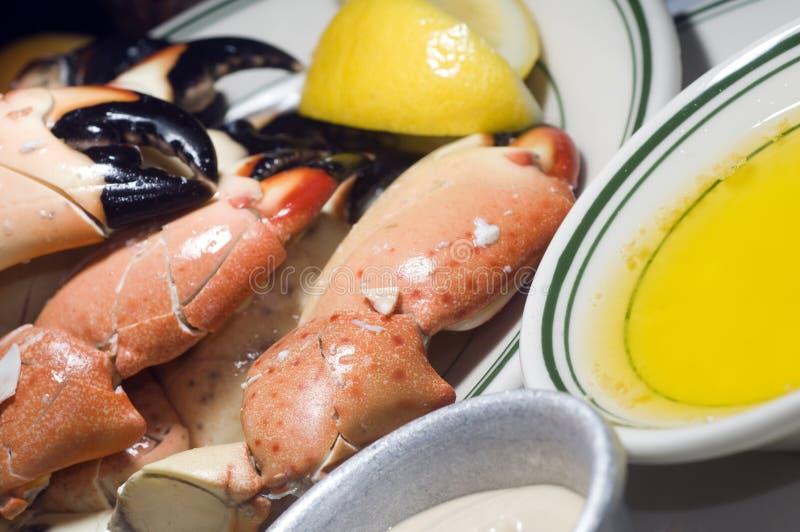 爪螃蟹佛罗里达石头 库存图片