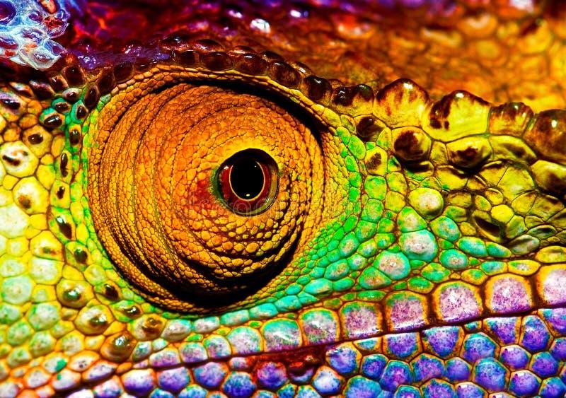 爬虫类眼睛