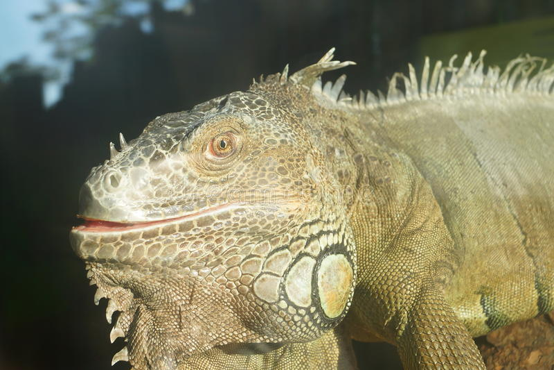 爬行动物在动物园里 免版税库存图片