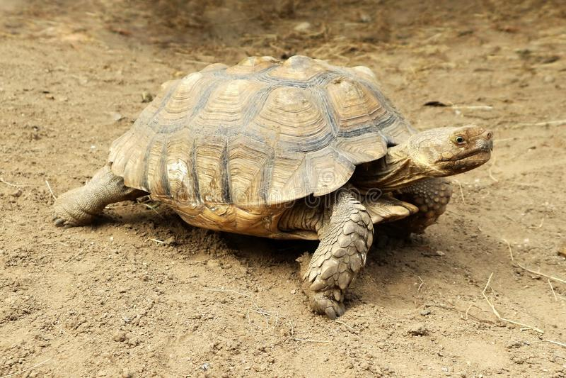 梦到乌龟在地上爬行
