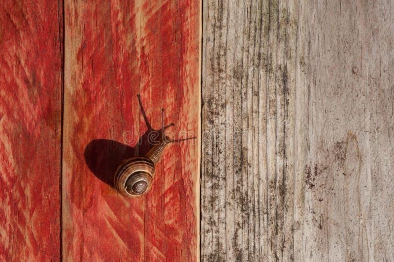 爬行在木纹理背景的蜗牛 免版税库存图片