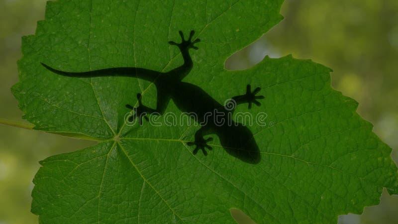 爬行在绿色的壁虎蜥蜴的阴影离开3d例证 图库摄影