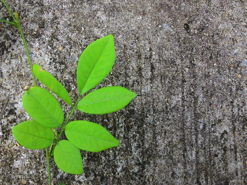 爬行植物背景 库存图片