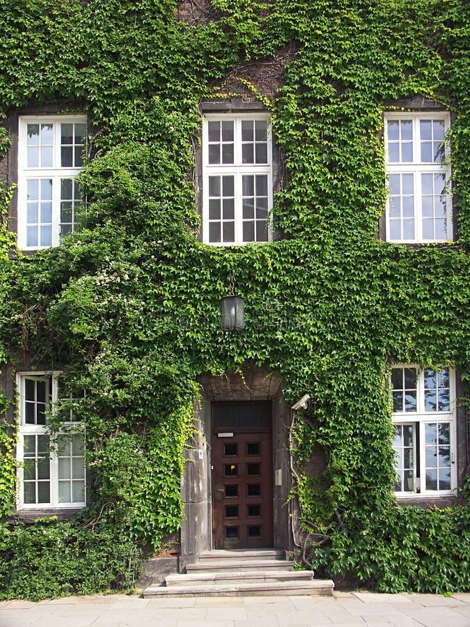 Download 爬行物葡萄树 库存图片. 图片 包括有 本质, 前面, 覆盖物, 拱道, 工厂, 视窗, 房子, 新鲜, 叶子 - 177069