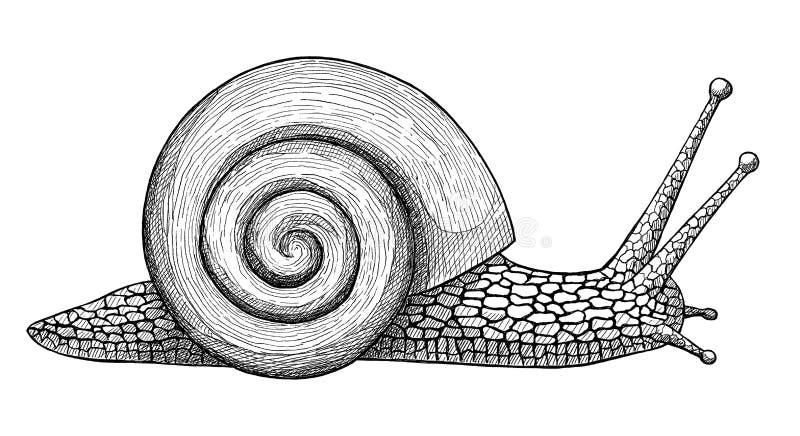爬行的蜗牛,着墨手拉的葡萄酒例证 皇族释放例证