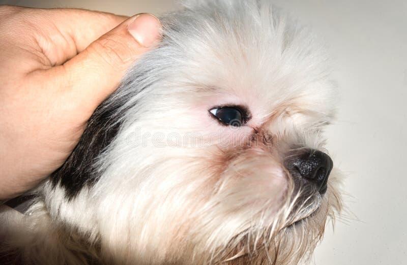 给爱和关心我们的宠物 免版税图库摄影