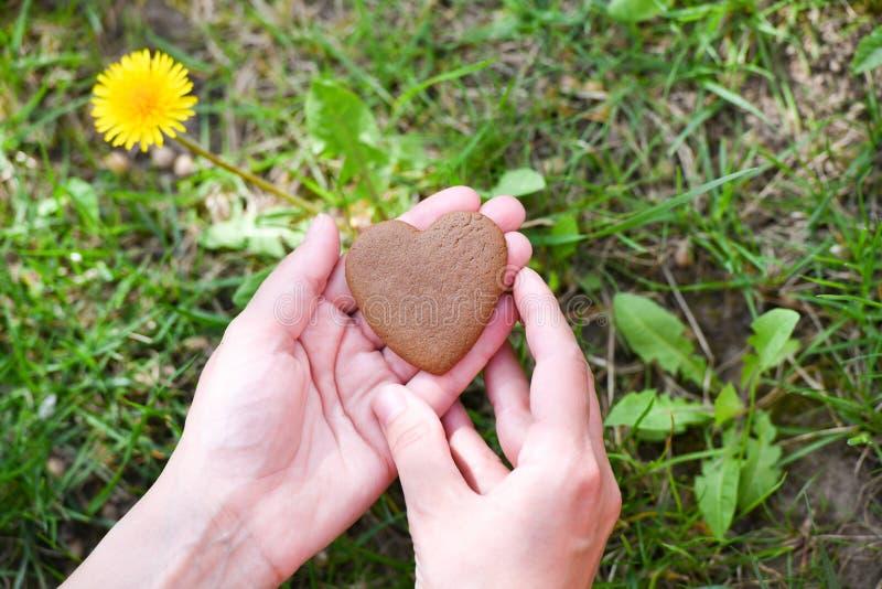 爱和情人节概念 在心脏形状的男性手在绿草领域背景的 免版税库存照片