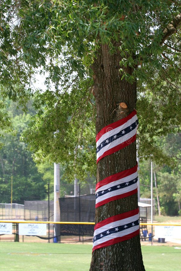 爱国结构树 库存图片