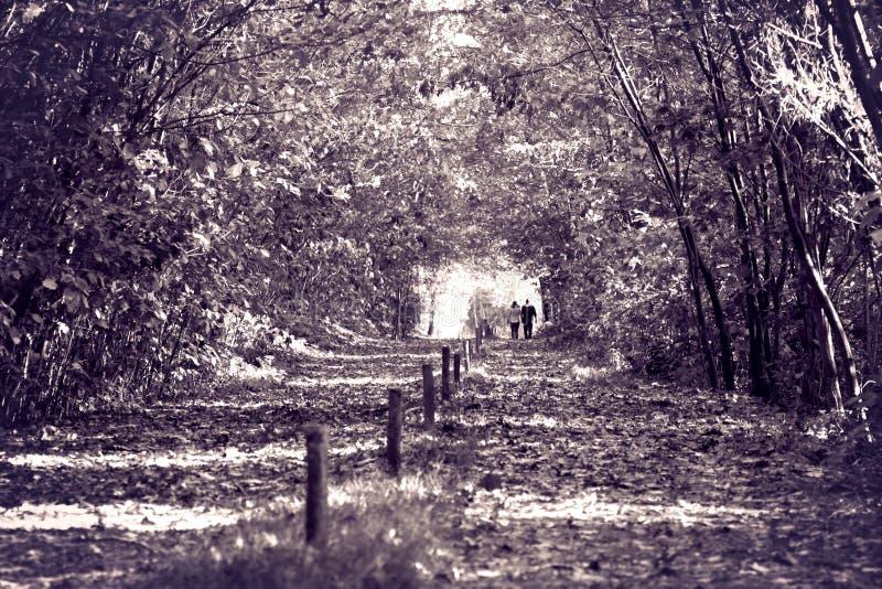 爱在森林 免版税库存图片
