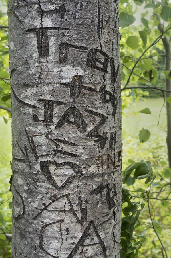 爱在Lover's车道,绿色山墙遗产地方,著名作家露西・莫德・蒙哥马利, auth的家的树雕刻的心脏 免版税库存图片
