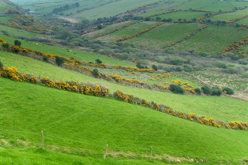 爱尔兰乡下 库存图片