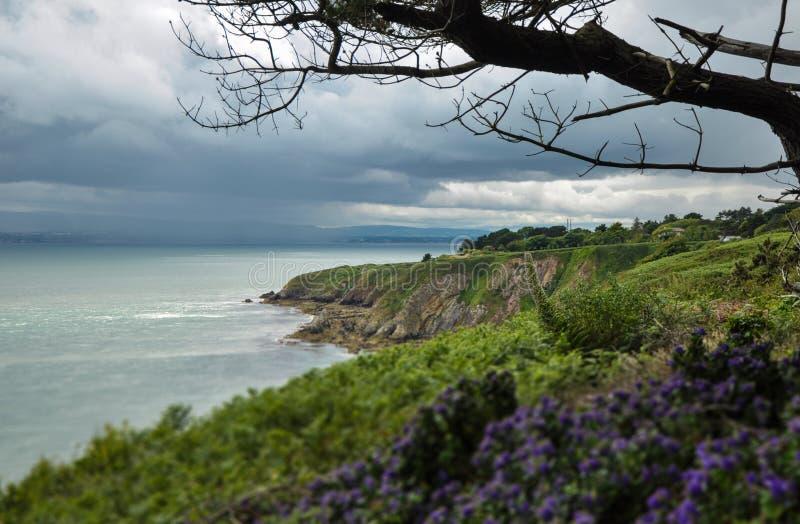 爱尔兰风景和花 免版税库存照片