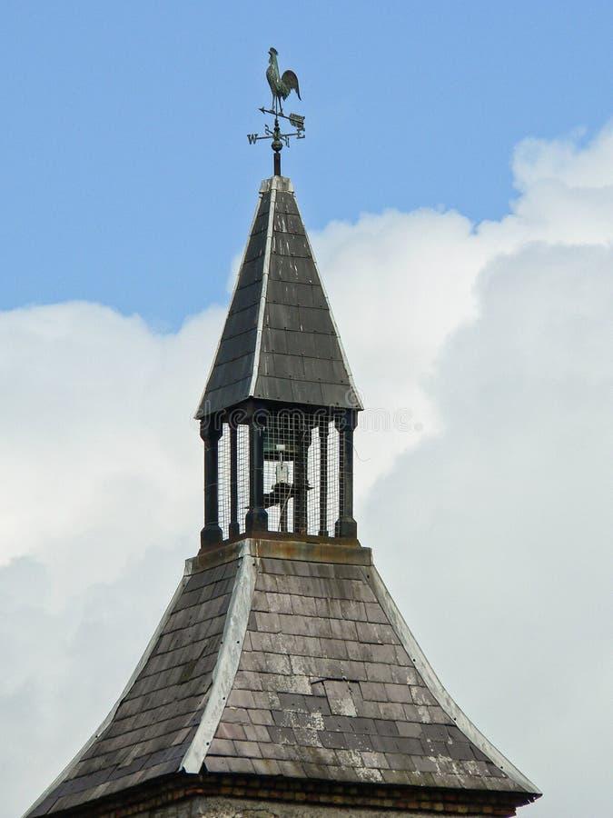 爱尔兰 冬葵- Mala 图库摄影