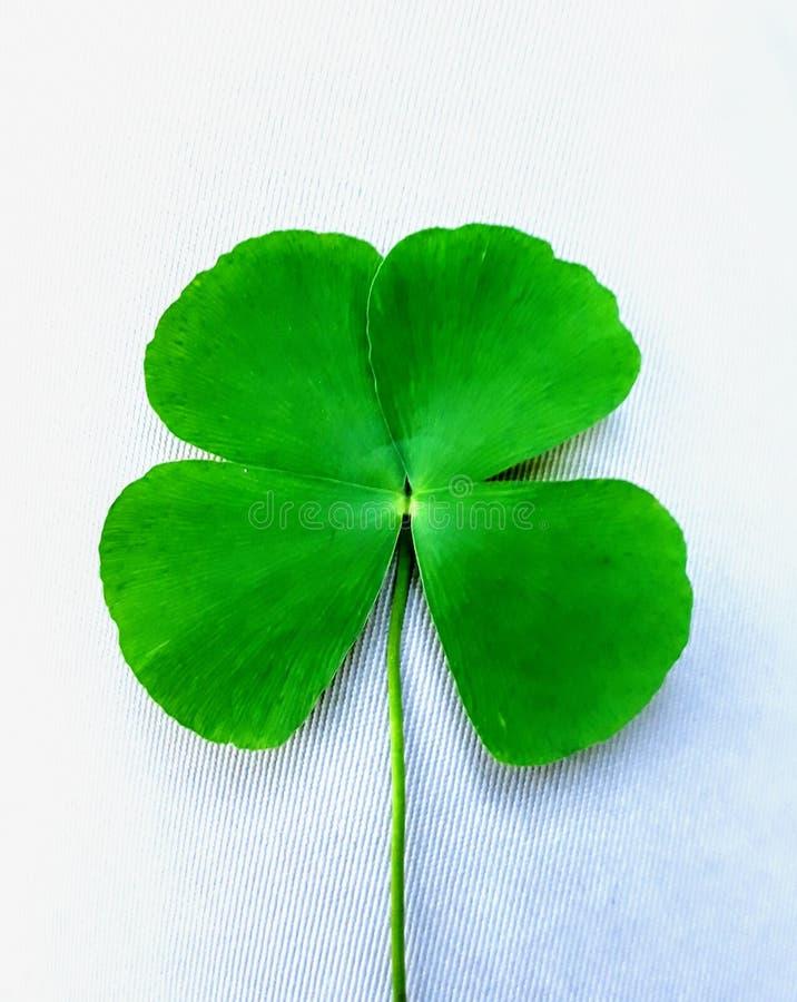 爱希望信念和运气四片叶子三叶草  库存照片