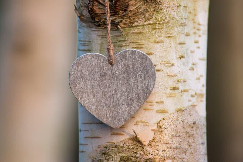 爱心脏树干 库存照片