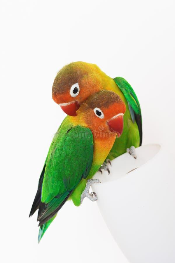 爱情鸟对 库存照片
