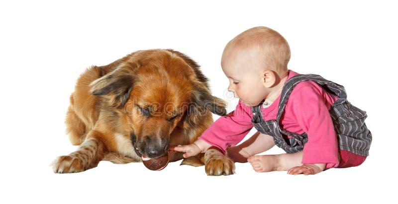爱抚一条忠实的爱犬的新婴孩 免版税库存图片