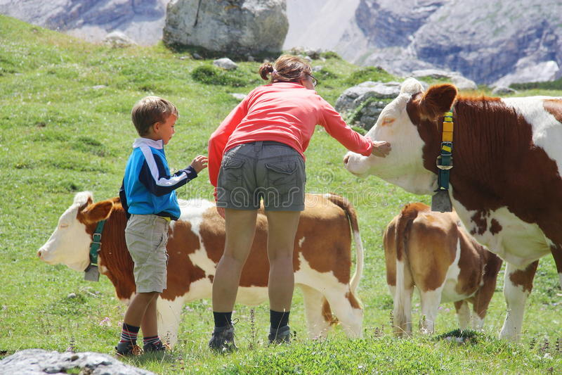 爱抚母牛的妈妈和儿子在夏天山假日期间 库存照片